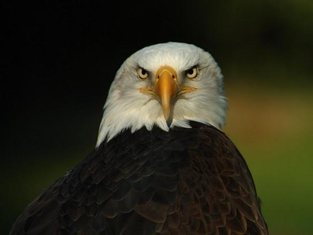 Name:  eagle.jpg Views: 221 Size:  17.9 KB