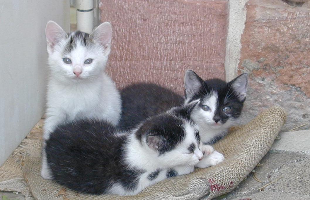Name:  Katzen.jpg Views: 38 Size:  131.4 KB